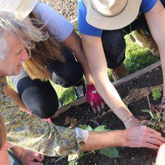 Herbstlicher Auftakt zum Junior City Farming Projekt